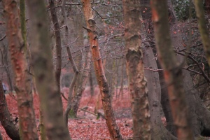Epping Forest in Winter a picture by martinv_morris