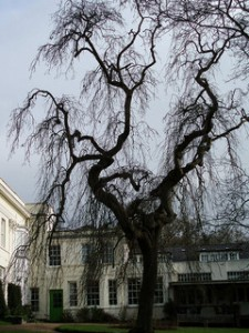 Woodbrooke Tree (C) Ben Jarman